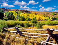 Aspen in fall color with split rail fence. Steens Mountain, Oregon.