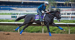 DEL MAR, CA - NOVEMBER 01: Midnight Storm, owned by Venneri Racing Inc. & Little Red Feather Racing and trained by Philip D'Amato, exercises in preparation for the Breeders' Cup Las Vegas Dirt Mile at Del Mar Thoroughbred Club on November 1, 2017 in Del Mar, California. (Photo by Jesse Caris/Eclipse Sportswire/Breeders Cup)