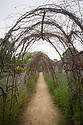 An eighty-foot-long birch tunnel, Parham, mid May. Grown to support a summer and autumn crop of pumpkins and squashes.