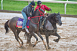 October 28, 2015 :   Private Zone, trained by Jorge Navarro and owned by Good Friends Stable, exercises in preparation for the Breeders' Cup Sprint at Keeneland Race Track in Lexington, Kentucky on October 28, 2015. Scott Serio/ESW/CSM