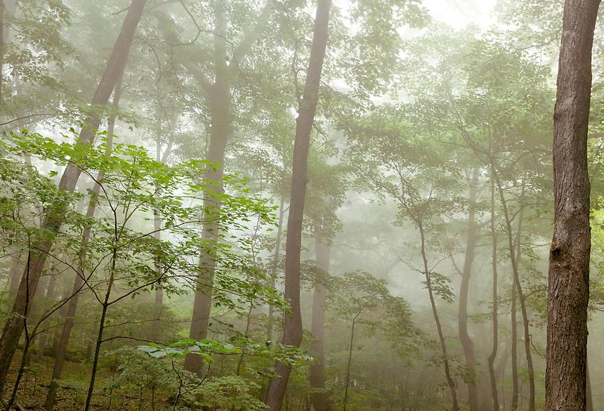Hardwood forest and fog, Effigy Mounds National Monument, Iowa