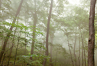 Hardwood forest and fog, Effigy Mounds National Monument, Iowa