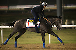 DUBAI,UNITED ARAB EMIRATES-MARCH 23: Arrogate,trained by Bob Baffert,exercises in preparation for the Dubai World Cup at Meydan Racecourse on March 23,2017 in Dubai,United Arab Emirates (Photo by Kaz Ishida/Eclipse Sportswire/Getty Images)