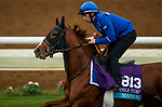 DEL MAR, CA - OCTOBER 31:  Masar, owned by Godolphin Stable Lessee and trained by Charlie Appleby, exercises in preparation for Breeders' Cup Juvenile Turfat Del Mar Thoroughbred Club on October 31, 2017 in Del Mar, California. (Photo by Alex Evers/Eclipse Sportswire/Breeders Cup)