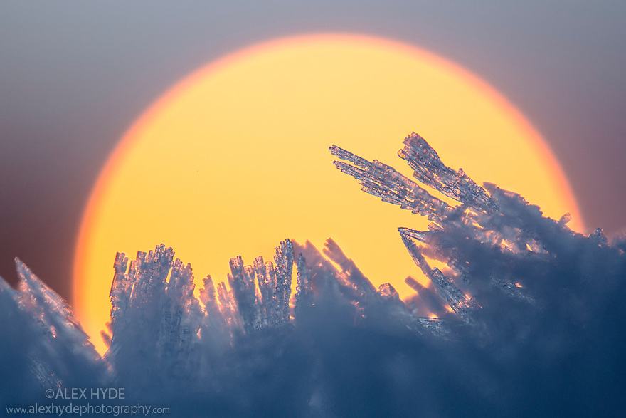 Ice crystals catching the first light of the day, Peak DIstrict National Park, Derbyshire, UK. December.