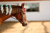PHC Unicorn Horse Show - Nov 24/19