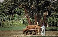 Afrique/Egypte: Scène champêtre sur les bords du Nil