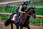 LOUISVILLE, KY - MAY 02: Midnight Bisou works out on the track in preparation for the Kentucky Oaks at Churchill Downs on May 2, 2018 in Louisville, Kentucky. (Photo by John Vorhees/Eclipse Sportswire/Getty Images)