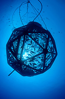 drifting, unanchored underwater fish cage or aquapod, used for open ocean fish pen aquaculture by Kampachi Farms LLC, holds Kona kampachi, Seriola rivoliana, also known as Hawaiian yellowtail, kahala, or almaco jack, Kona Coast, Big Island, Hawaii, USA, Pacific Ocean