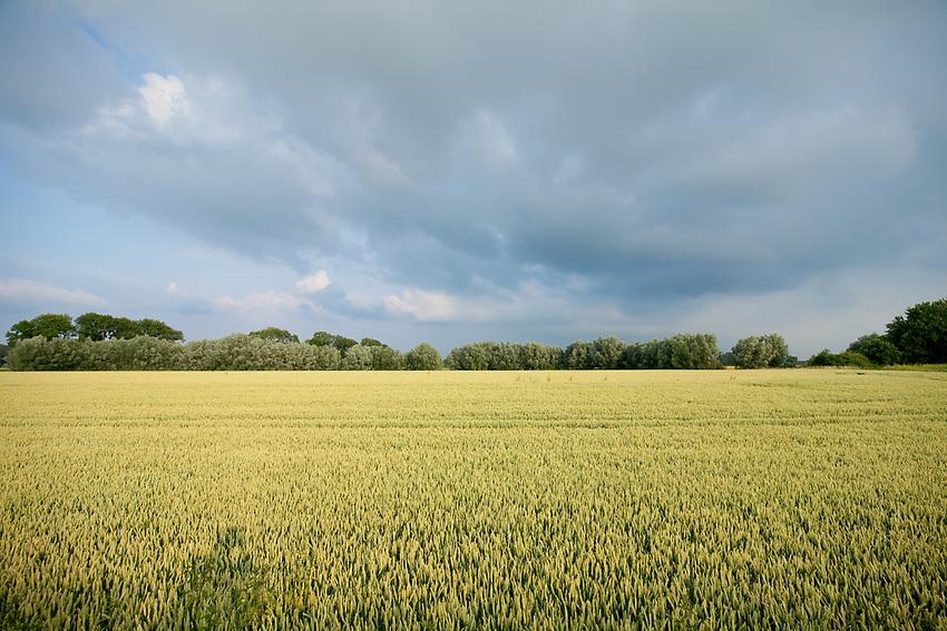 Europa, DEU, Deutschland, Nordrhein-Westfalen, Niederrhein, Agrarlandschaft, Getreidefeld, Wolken, Regenwolken, Natur, Umwelt, Landschaft, Jahreszeiten, Stimmungen, Landschaftsfotografie, Landschaften, Landschaftsphoto, Landschaftsphotographie, Wetter, Wetterelemente, Wetterlage, Wetterkunde, Witterung, Witterungsbedingungen, Wettererscheinungen, Meteorologie, Wettervorhersage, <br /> <br /> [Fuer die Nutzung gelten die jeweils gueltigen Allgemeinen Liefer-und Geschaeftsbedingungen. Nutzung nur gegen Verwendungsmeldung und Nachweis. Download der AGB unter http://www.image-box.com oder werden auf Anfrage zugesendet. Freigabe ist vorher erforderlich. Jede Nutzung des Fotos ist honorarpflichtig gemaess derzeit gueltiger MFM Liste - Kontakt, Uwe Schmid-Fotografie, Duisburg, Tel. (+49).2065.677997, ..archiv@image-box.com, www.image-box.com]