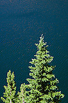 high mountain lake and spruce trees