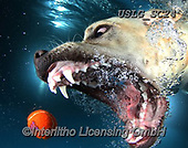 REALISTIC ANIMALS, REALISTISCHE TIERE, ANIMALES REALISTICOS, dogs, paintings+++++SethC_Charley_IMG_9934rev,USLGSC24,#A#, EVERYDAY ,underwater dogs,photos,fotos ,Seth