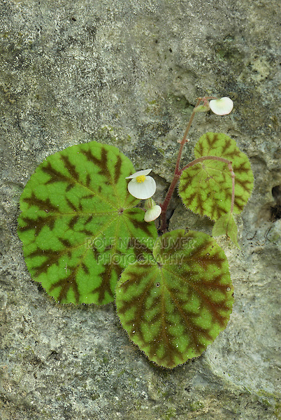 Flower with leaves growing out of a rock, Erawan Nationalpark, Thailand