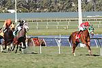 Parranda with jockey Jose A Lezcano on board wins the Florida Sunshine Millions Filly and Mare Turf  at  Gulfstream Park, Hallandale Beach, Florida 01-18-2014