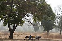 MALI, Kayes, Sadiola, children transport water in jerry cans on donkey cart /Kinder transportieren Wasser mit Eselskarren