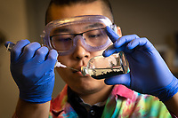 Biological Sciences Sophomore Michael Martinez studies ways to isolate rare earth metals from samples of Alaskan coal in Professor Brandon Briggs' lab in UAA's ConocoPhillips Integrated Science Building.