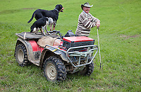 "A Musterer (Shepherd) with Sheep Dogs and ""Quad-bike"" near Masterton, Wairarapa region, north island, New Zealand."