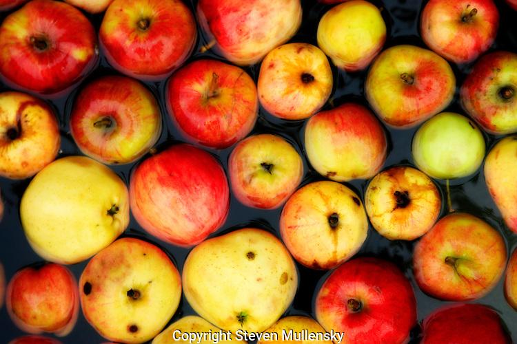 Apples ready for bobbin'