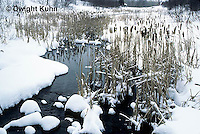 PO04-002b  Small pond with cattails in winter