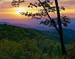 Shenandoah National Park, VA<br /> Sunset silhouettes a White Oak above Blue Ridge mountains