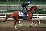 ARCADIA, CA - NOV 01: Gun Runner, owned by Winchell Thoroughbreds LLC & Three Chimneys Farm LLC and trained by Steven M. Asmussen, exercises in preparation for the Breeders' Cup Las Vegas Dirt Mile at Santa Anita Park on November 1, 2016 in Arcadia, California. (Photo by Scott Serio/Eclipse Sportswire/Breeders Cup)