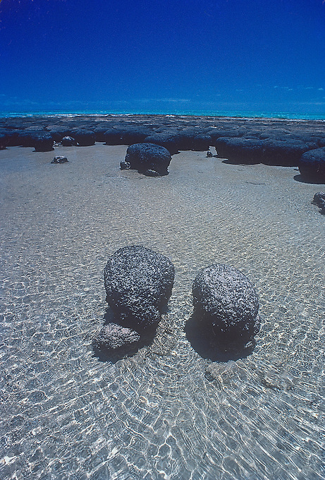 Stromatolites.3,000 years ago microbes started building up stromatolites in Hamelin Pool in the south of the bay.These structures are the earliest signs of life on Earth, with some fossilized ones being found from 3,500 million years ago (though the biological origin of these fossils is disputed) at North Pole also in Western Australia, and are considered the longest continuing biological lineage.They were first identified in 1956 here in Hamelin Pool as a living species, before that only being known in the fossil record, so they are living fossils. Hamelin Pool contains the most diverse and abundant examples of living stromatolite forms in the world.It is now hypothesized that some of these stromatolites contain a new form of chlorophyll..