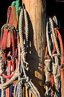 Ropes and leads for horses at Triangle X Dude Ranch in Grand Teton National Park