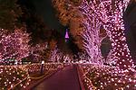 Illuminations at Shinjuku Terrace City on November 16, 2017, Tokyo, Japan. Shinjuku Terrace City Illuminations are seen around Odakyu Line Shinjuku Station. This year marks the 12th year of the illumination event, which can be enjoyed until February 22, 2018. (Photo by Rodrigo Reyes Marin/AFLO)