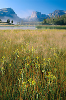 Marsh butterweed and Squaretop Mountain<br /> Green River Valley,  Wind River Range<br /> Bridger-Teton National Forest<br /> Rocky Mountains,  Wyoming