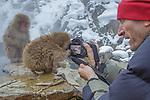 Japanese Macaques, Nagano Prefecture, Japan