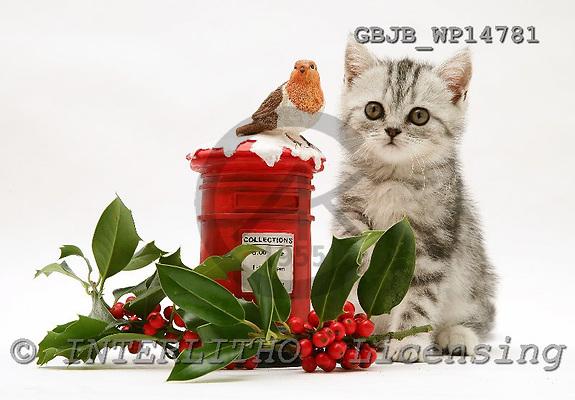 Kim, CHRISTMAS ANIMALS, photos, GBJBWP14781,#XA# stickers