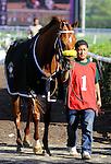 25 September 10: Grand Rapport (1), jockey Ramon Dominguez aboard, win the Kent Stakes at Delaware Park in Stanton, Delaware