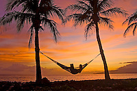 A girl uses a laptop at sunset while reclining in a hammock between two palm trees on Maui's west side.