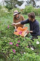Europe/France/Bretagne/56/Morbihan/ Belle-Ile-en-Mer:  Sandrine et Olivier Ferrando agriculteurs bio, fleurs et cosmétiques