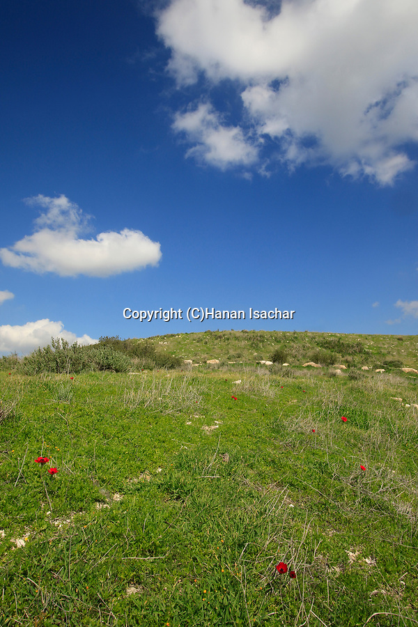 Israel, Shephelah, Beth Guvrin national park, a view of Tel Maresha