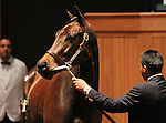 Hip 120 Bouquet Booth consigned by Taylor Made sales, sold for $600,000..November 05, 2012.