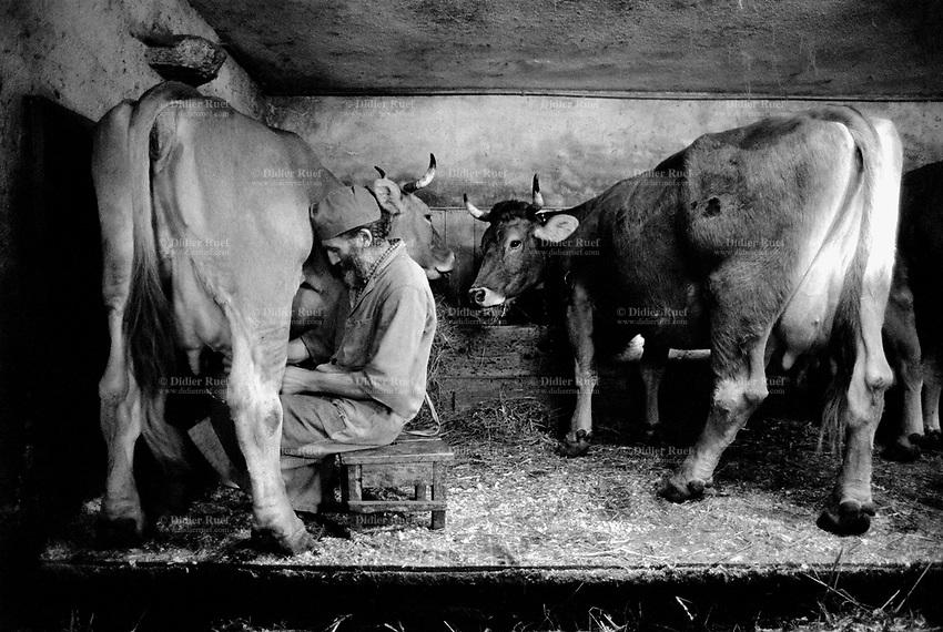 Switzerland. Canton Graubünden. Bondo. Bregaglia valley.  The man is milking the cows. Manual labor. Swiss alpine farmers. Alps mountains peasants. © 1997 Didier Ruef