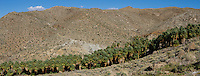 Stock - Palm Springs Indian Canyons