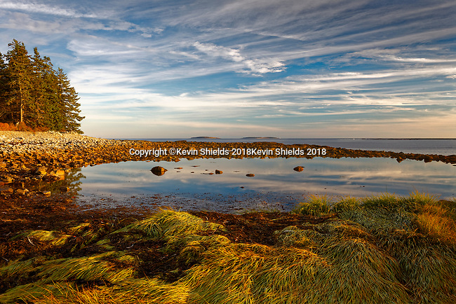 Tidepool in Acadia National Park, Maine