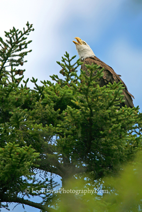 #BE10 Screaming Eagle