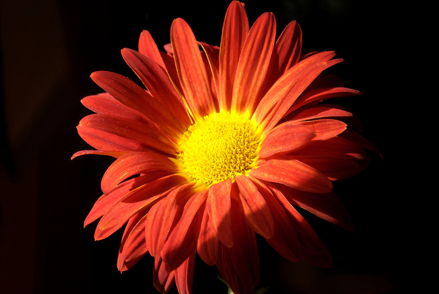 A flowers beauty may be fleeting, but this one will will live on in perpetuity.