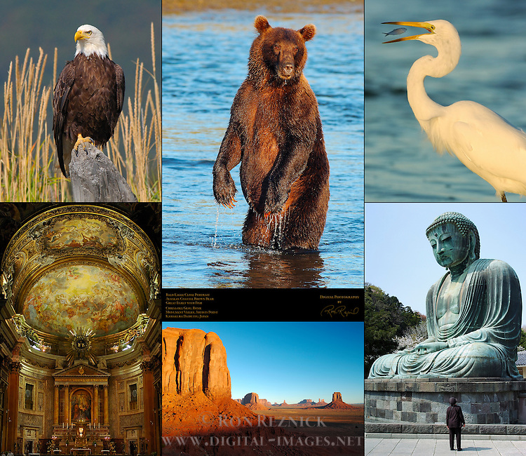 Bald Eagle, Alaskan Coastal Brown Bear Male Standing at Sunset, Great Egret with Fish, Chiesa del Gesu Rome, Monument Valley Artists Point, Kamakura Daibutsu Kotoku-in, Composite Image