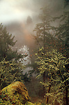 Old growth conifer forest, mountain lake in fog, Bald Hill, Washington State, Pacific Northwest wilderness,