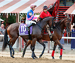 Purrfect Miss in the post parade as Dream Tree (no. 8) wins the Prioress Stakes (Grade 2), Sep. 2, 2018 at the Saratoga Race Course, Saratoga Springs, NY.  Ridden by Mike Smith, and trained by Bob Baffert, Dream Tree finished 4 1/4 lengths in front of Mia Mischief (No. 4).  (Bruce Dudek/Eclipse Sportswire)