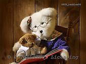 Xavier, CUTE ANIMALS, teddies, photos, SPCHTEDDIES99,#ac#