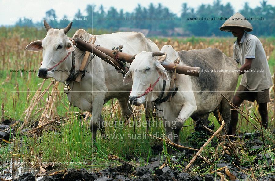 INDONESIA Java, farmer plough paddy field with ox / INDONESIEN Java, Bauer pfluegt Reisfeld mit Ochsen