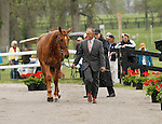 LEXINGTON, KY - APRIL 27: #84 Copper Beach, and rider Bruce (Buck) Davidson Jr. jog before the vets and grand jury during the first horse inspection for the Rolex Three Day Event on Wednesday April 27, 2016 in Lexington, Kentucky. (Photo by Candice Chavez/Eclipse Sportswire/Getty Images)