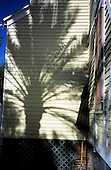 Florida, USA. Shadow of palm tree on pastel yellow wood panelled wall of Hard Rock Cafe in Key West.