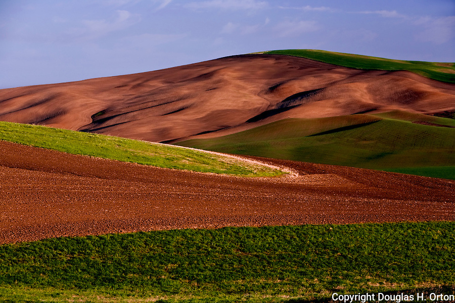 Early morning the landscape undulates with light in the Palouse Hills, Washington, known as the heart of wheat farming in the United States is also famous for its rolling scenery.  This landscape is from Kamiak Butte, a Whitman County Park offering camping, picknicking, hiking, and incredible views of both Idaho and Washington Palouse country.  Steptoe Butte, a Washington State Park, is in the background.
