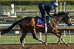 ARCADIA, CA  OCTOBER 30:  Breeders' Cup Filly & Mare Turf entrant Sistercharlie, trained by Chad C. Brown,   exercises in preparation for the Breeders' Cup World Championships at Santa Anita Park in Arcadia, California on October 30, 2019.  (Photo by Casey Phillips/Eclipse Sportswire/CSM)